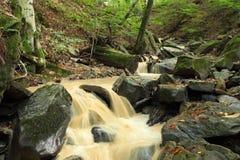 Corriente del bosque del otoño Imagenes de archivo