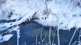Corriente del bosque en hierba de la naturaleza de la nieve del invierno y paisaje hermoso del árbol almacen de metraje de vídeo