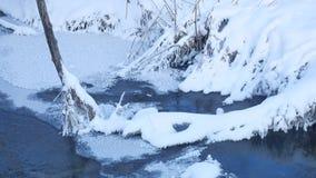 Corriente del bosque en hierba de la nieve de la naturaleza del invierno y paisaje hermoso del árbol metrajes