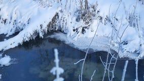 Corriente del bosque en naturaleza de la hierba de la nieve del invierno y paisaje hermoso del árbol almacen de video