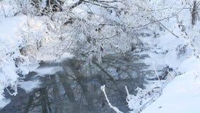 Corriente del bosque en paisaje hermoso de la hierba de la nieve del invierno y de la naturaleza del árbol almacen de video