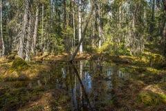 Corriente del bosque en primavera Foto de archivo