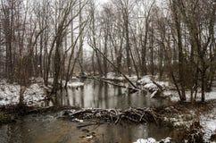 Corriente del invierno con la presa del castor Fotos de archivo libres de regalías