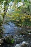 Corriente del otoño Foto de archivo libre de regalías