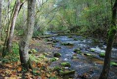 Corriente del otoño Fotografía de archivo libre de regalías