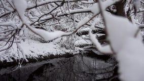 Corriente del río con los árboles caidos en el bosque en invierno almacen de video