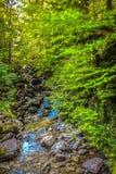 Corriente del verdor y del agua del bosque de Washington del soporte fotografía de archivo libre de regalías