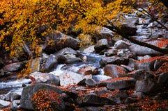 Corriente en bosque de oro de la caída Foto de archivo