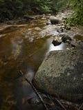 Corriente en el bosque Imagen de archivo