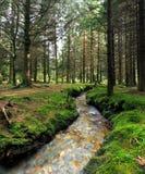 Corriente en el bosque Imágenes de archivo libres de regalías