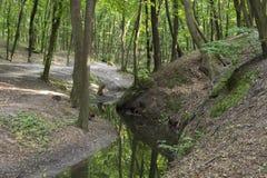 Corriente en el bosque imagenes de archivo
