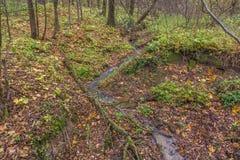 Corriente en el bosque Fotografía de archivo libre de regalías