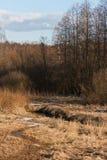 Corriente en el bosque de la primavera en la puesta del sol Restos de la nieve en abril en hierba secada del ` s del año pasado Imagen de archivo libre de regalías