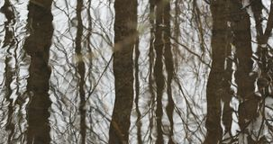 Corriente en el invierno Forest Flow Of Melt Water entre nieve Acercamiento de la primavera en naturaleza europea metrajes