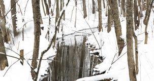 Corriente en el invierno Forest Flow Of Melt Water entre nieve Acercamiento de la primavera en naturaleza europea almacen de video