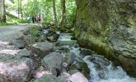 Corriente en el valle de Zadiel, Eslovaquia Imágenes de archivo libres de regalías