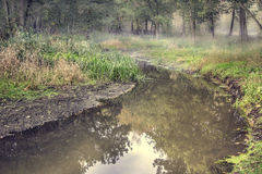 Corriente en un bosque Foto de archivo libre de regalías