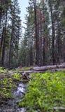 Corriente en Yosemite con la hierba verde imagen de archivo