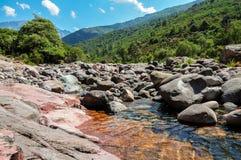 Corriente fresca con los árboles y las montañas verdes en Córcega Fotografía de archivo