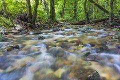 Corriente fresca y limpia en selva tropical tropical Fotos de archivo libres de regalías