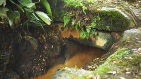Corriente fuerte de la contaminación de agua en el bosque metrajes