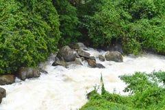Corriente fuerte del agua que atraviesa el bosque y las piedras verdes - papel pintado natural del paisaje Fotos de archivo