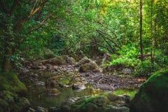 Corriente hawaiana en la selva de Oahu imagen de archivo