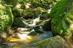 Corriente hermosa de la montaña con Moss Covered Stones Foto de archivo