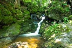 Corriente hermosa de la montaña con Moss Covered Stones Foto de archivo libre de regalías