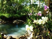 Corriente lateral de las orquídeas blancas del cattleya imagenes de archivo