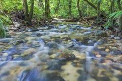 Corriente limpia y fresca en selva tropical tropical Foto de archivo libre de regalías
