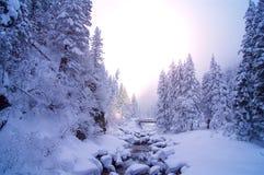 Corriente Nevado en el bosque con el sol Imagen de archivo libre de regalías