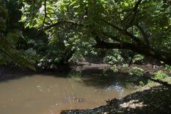 Corriente pacífica en el bosque imagen de archivo libre de regalías