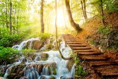 Corriente profunda del bosque con agua cristalina en la sol Foto de archivo libre de regalías