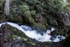 Corriente que atraviesa el bosque verde Fotos de archivo libres de regalías