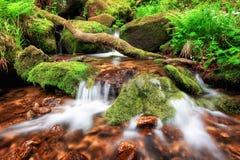 Corriente que conecta en cascada suavemente abajo de un bosque de la montaña Imagen de archivo libre de regalías