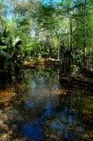 Corriente que corre a través de bosque Imagen de archivo libre de regalías