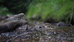 Corriente que fluye entre las rocas con el sonido auténtico metrajes