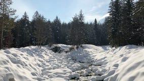 corriente rápida de la montaña entre la primavera un deshielo en el bosque metrajes