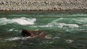 Corriente rápida del río de la montaña metrajes