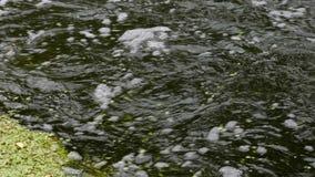 Corriente rápida y hojas del agua que flotan en el río almacen de video