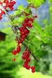 Corriente roja Foto de archivo libre de regalías