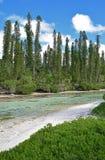 Corriente salobre baja del río con la fila de los árboles de pino y de la planta blanca en los pernos del DES de Ile, Nueva Caled Fotos de archivo libres de regalías