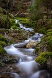 Corriente suavemente que fluye del agua en el bosque Imágenes de archivo libres de regalías