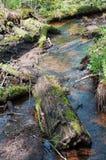 Corriente y árboles con el musgo Imagen de archivo libre de regalías