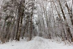 Corrientes del invierno del bosque ice de un lago nevado hermoso y del bosque Fotos de archivo