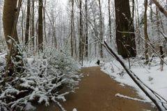 Corrientes del invierno del bosque ice de un lago nevado hermoso y del bosque Fotografía de archivo