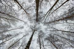 Corrientes del invierno del bosque ice de un lago nevado hermoso y del bosque Fotos de archivo libres de regalías