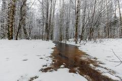 Corrientes del invierno del bosque ice de un lago nevado hermoso y del bosque Imagen de archivo libre de regalías