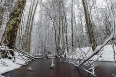 Corrientes del invierno del bosque ice de un lago nevado hermoso y del bosque Fotografía de archivo libre de regalías